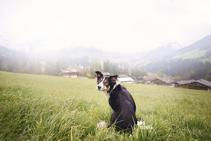 Dog photography | Mogwai Border Collie | www.DOGvision.be | fog in the montains of Ausrtia