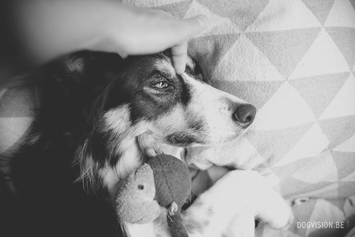 Sleeping Mogwau | Border Collie | DOGvsion.be | dog photography | behind the scenes