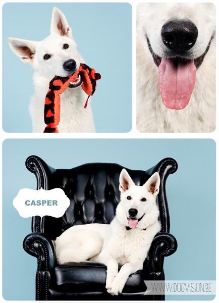 Casper | www.DOGvision.be