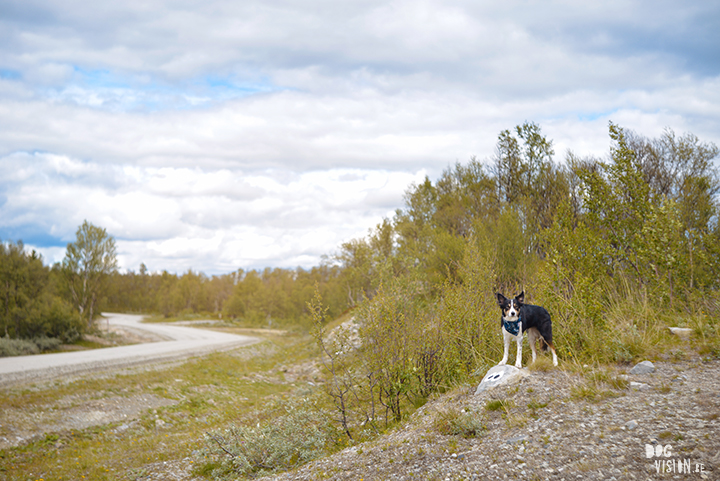 Flatruet and camping with dogs in Jämtland, Sweden | blog on www.DOGvision.be