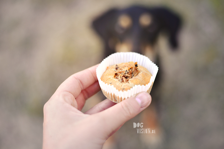 Cupcakes for a birthday dog | Ravasz Transylvanian hound| Blog & dog photography tips on www.DOGvision.be