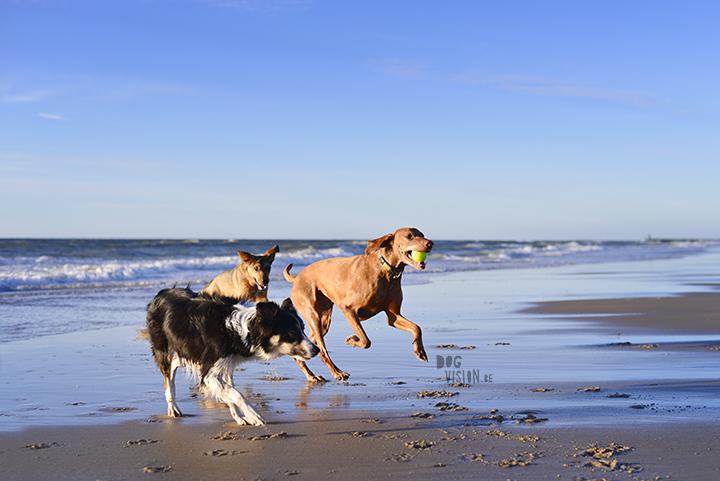 Juni | hondenfotografie | DOGvision.be