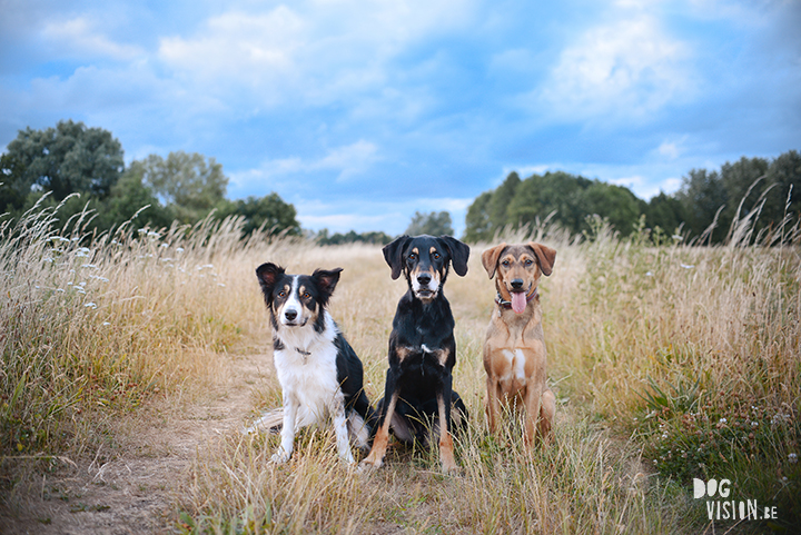 All 3 of my dogs together | www.DOGvision.be