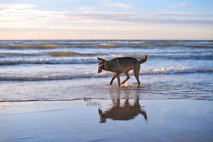 Our secret spot at the beach, Domburg Netherlands | dog photography/ hondenfotografie | www.DOGvision.be