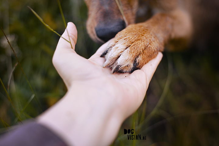 How to find your own photographic style? | dog photography tips & tricks on www.DOGvision.be (vintage camera)