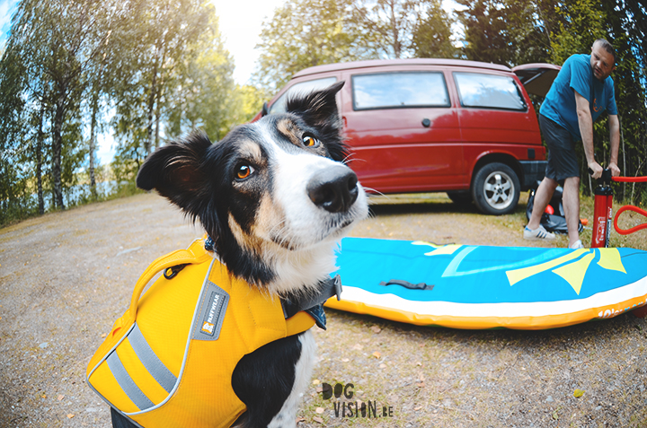 Red Paddle DOG sup | Summer adventures with dogs | www.DOGvision.be