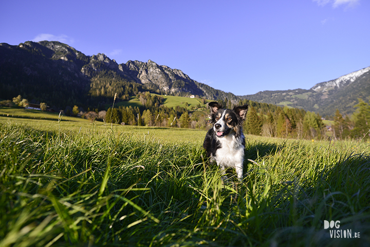 Beautiful dog photogrpahy | traveldogs & adventure | Dog photography tips on www.DOGvision.be