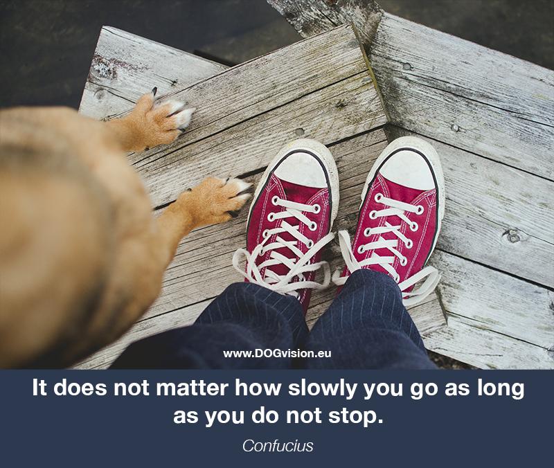 Stephen-hawkin-quote, monday motivation, dog photographer Fenne Kustermans, www.DOGvision.eu