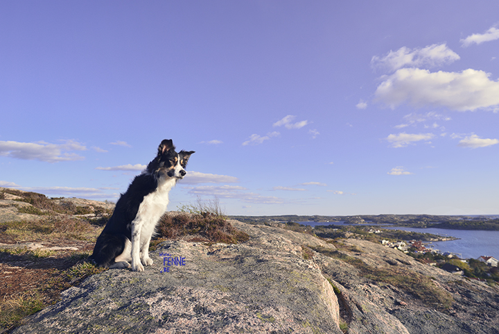 Beautiful dog photogrpahy | traveldogs & adventure | Fjällbacka, Sweden | Dog photography tips on www.DOGvision.be