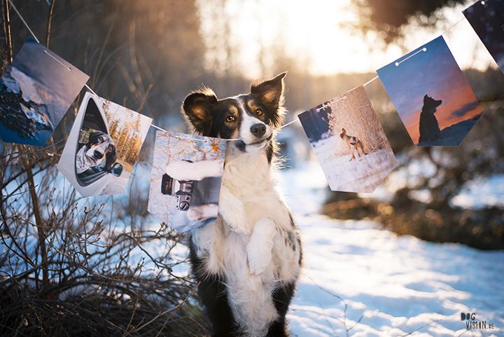 Fotoslinger, foto's honden afdrukken, hondenfotografie, blog op www.DOGvision.be