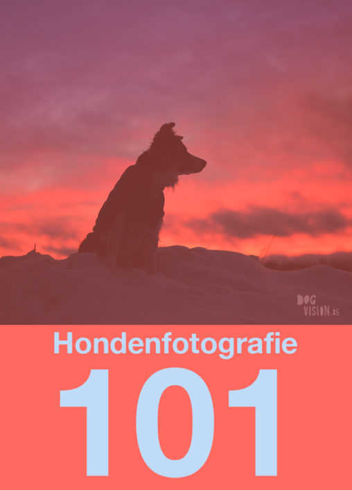 Hondenfotografie 101| www.DOGvision.be