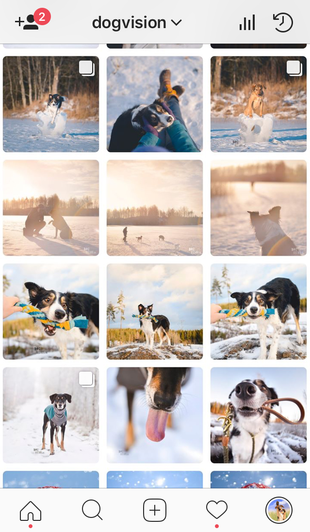 Dogs Of Instagram: organizing your feed | blog on www.dogvision.eu