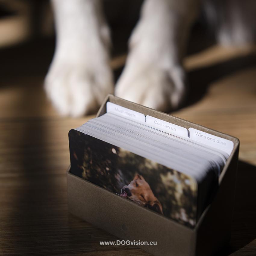 blog honden, hondenfotografie, honden online, grafisch ontwerp voor honen shop, www.DOGvision.be