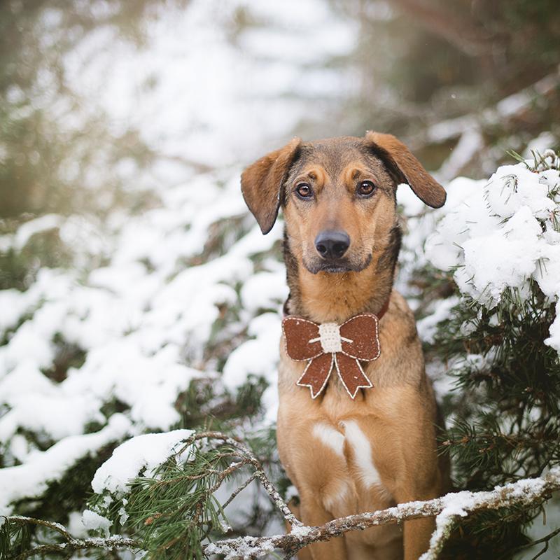 #TongueOutTuesday (52), studio foto rescue Kreta, puppy, hondenfotografie, hondenfotograaf, honden in Zweden, www.DOGvision.be