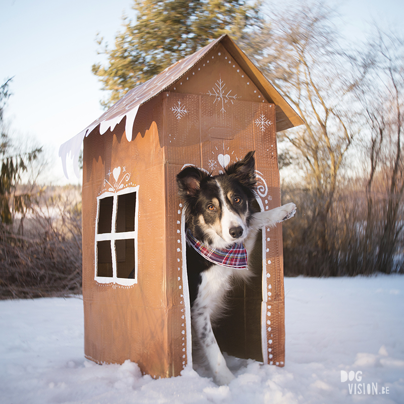 Gingerbread house day, December 13th, dog holiday photoshoot ideas, www.DOGvision.eu