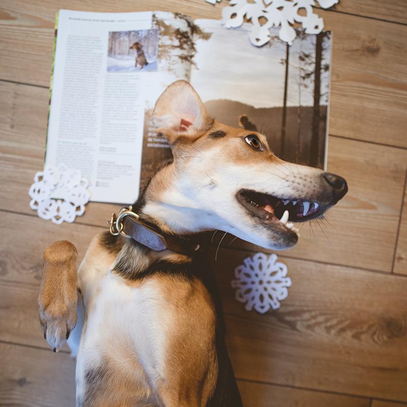 Belgische Woef magazine, baasjes in het buitenland, Zweden, hondenfotografie, hondenfotograaf Fenne, www.DOGvision.be