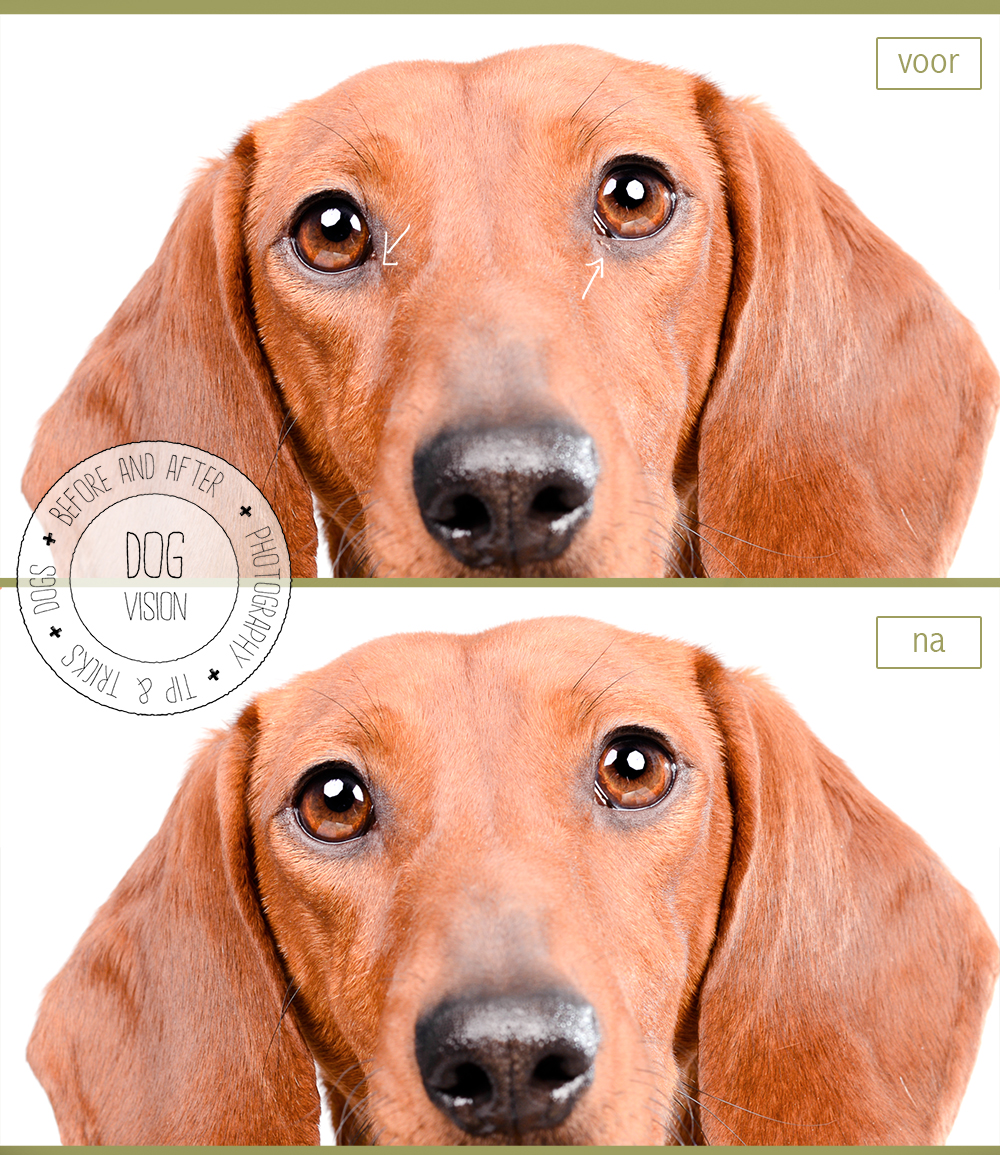 Photoshop tips & tricks | DOGvision | www.DOGvision.be | dog photography