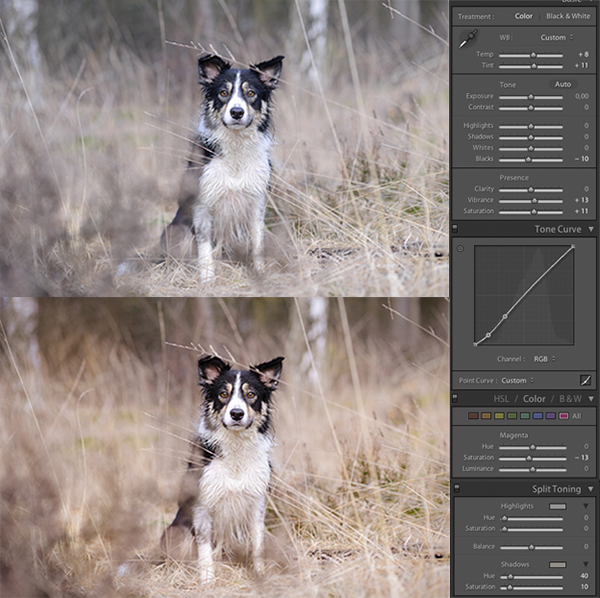 Vivid effect with lightroom | www.DOGvision.be | dog photography