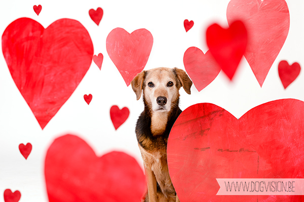 Valantine's day | www.DOGvision.be