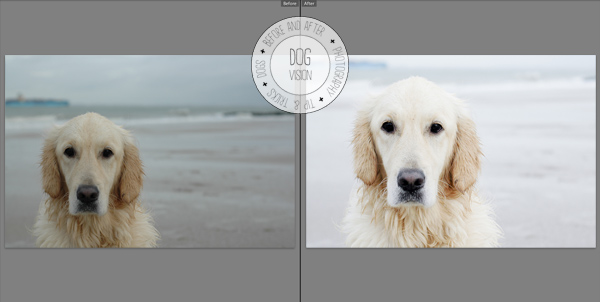 Nikon D70s, ISO 400, 50mm, 1/640, f 4.5