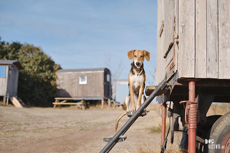Road trip Europa met onze honden, hondvriendelijke camping Duitsland, adoptie hond Lizzie uit Kreta, hondenfotografie DOGvision.be