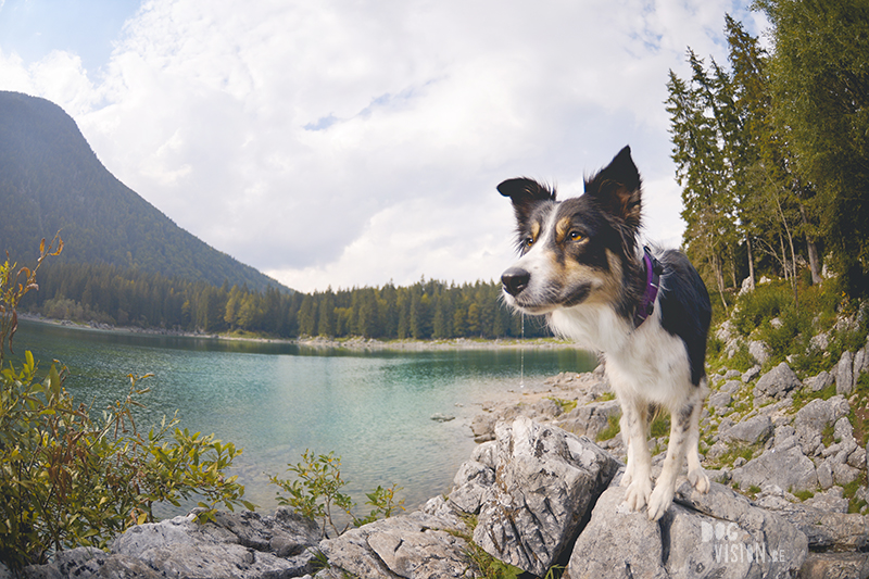sept18-314Border Collie Mogwai in Italy. Dog photographer Europe, Editorial dog photography, www.DOGvision.eu