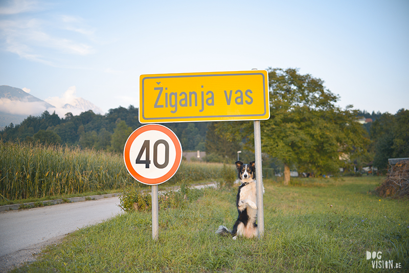 road trip with dogs to Slovenia, traveling with dogs, dog photographer, dog blogger, creative dog photography, www.DOGvision.eu