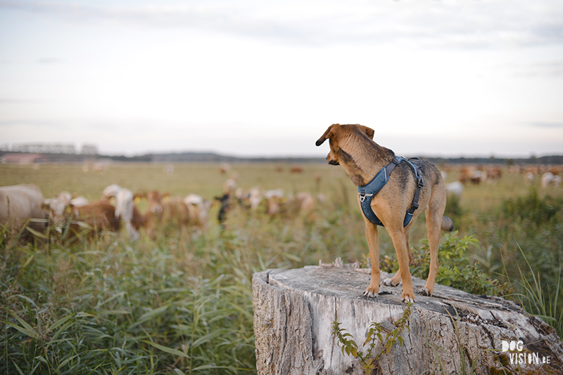 Reizen met honden, road trip honden Europa, Camping Duitsland, Wandeling, www.DOGvision.be
