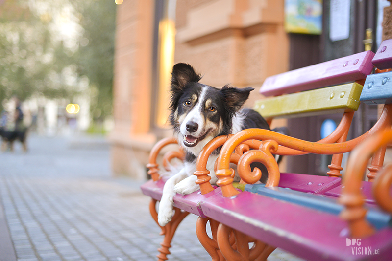 Dog photography, Border Collie, traveling with dogs, Ljubljana, Slovenia, www.DOGvision.eu