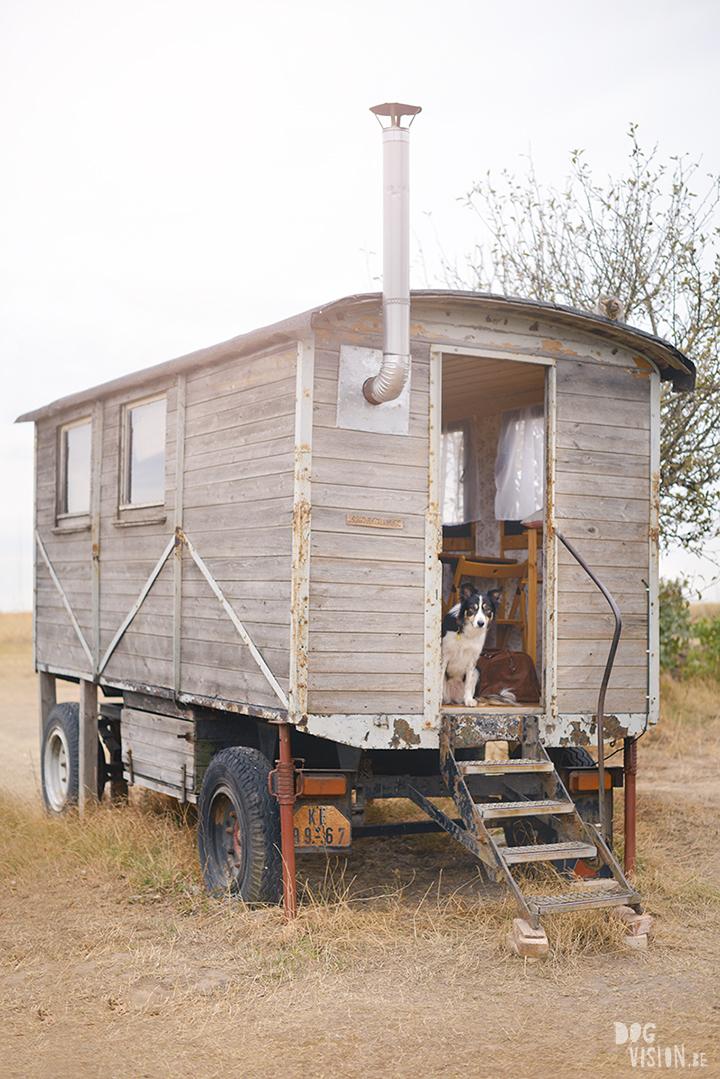 Road trip met honden in Europa, Kamperen in Duitsland met honden, www.DOGvision.be