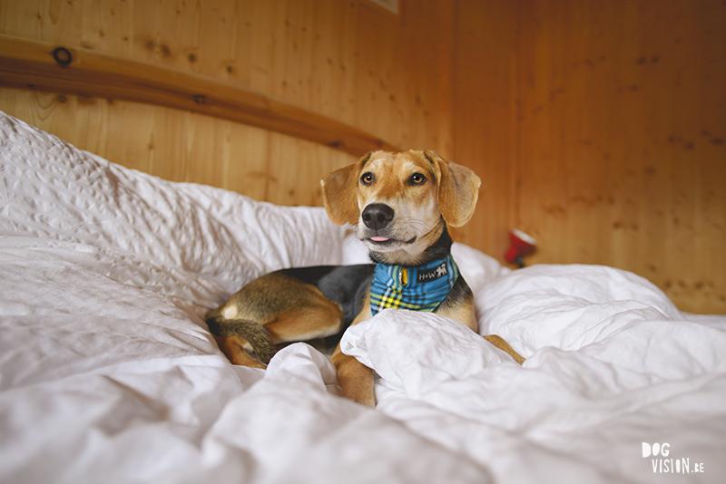 #TongueOutTuesday (44), hondenfotografie, reizen met honden in Europa, Adoptie hond uit Kreta, www.DOGvision.be