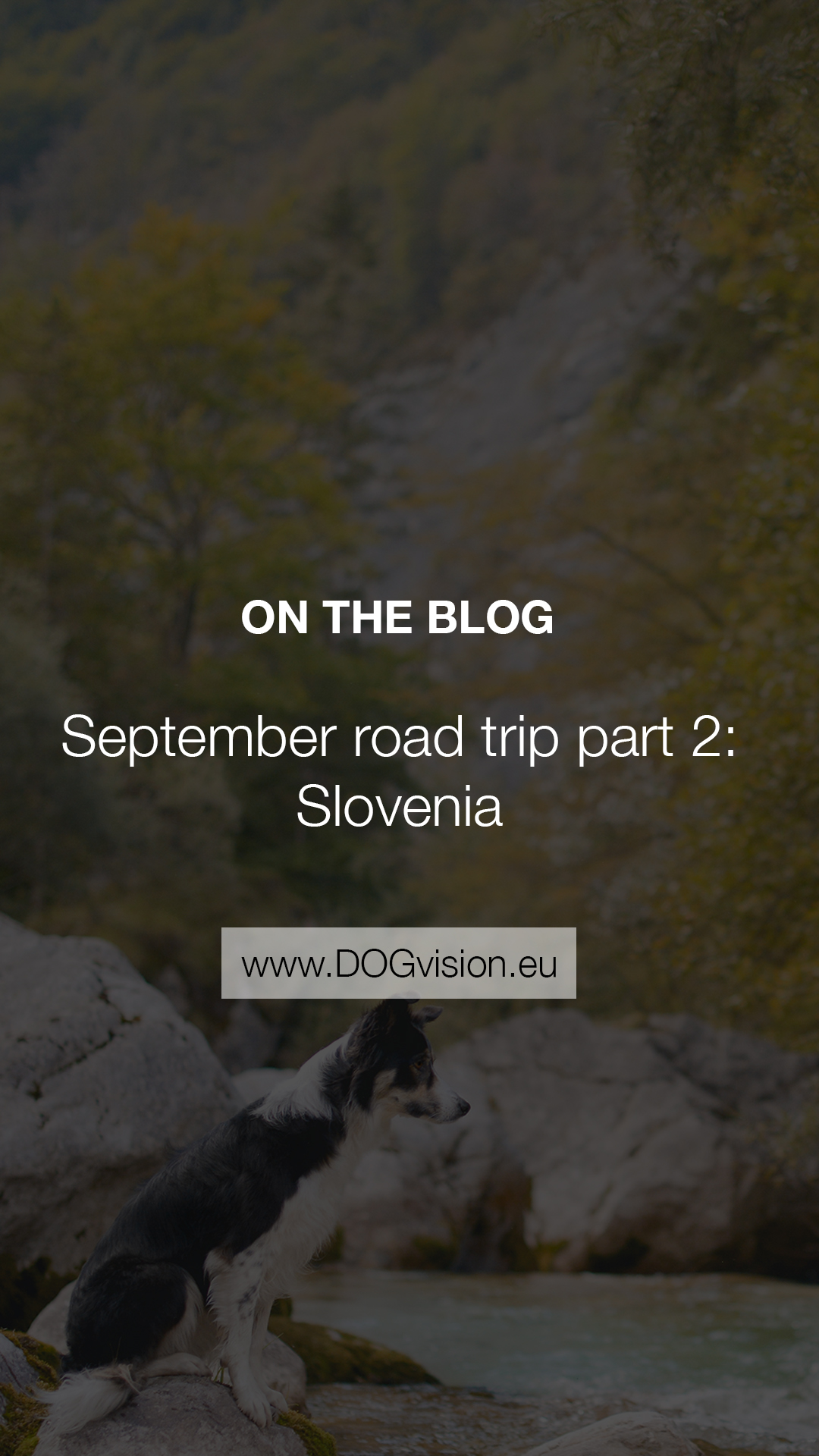September road trip with dogs to Slovenia, dog photographer, traveling Europe with dogs, www.DOGvision.eu