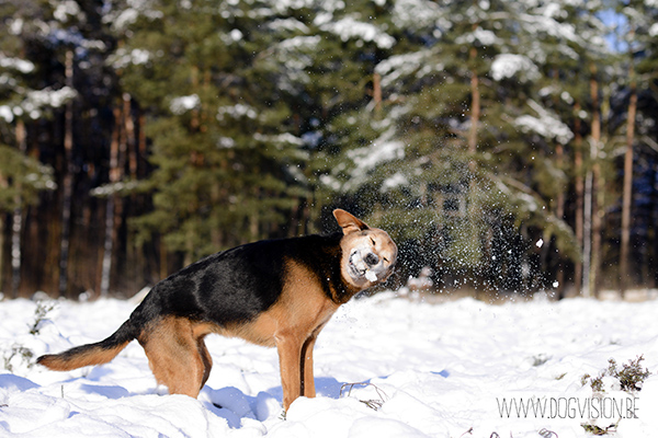 Sneeuw | www.DOGvision.be | hondenfotografie