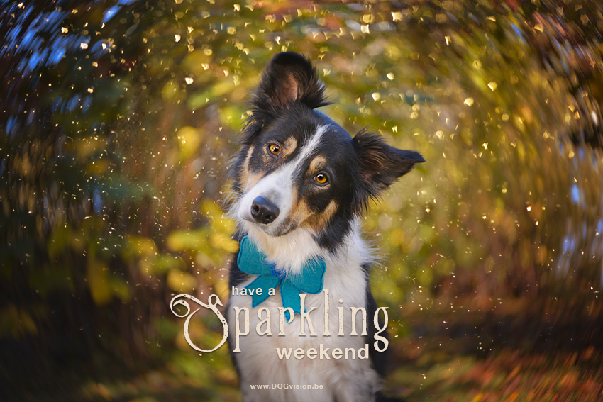 Have a sparkling weekend | Border Collie | lensbaby Twist 60 | www.DOGvision.be