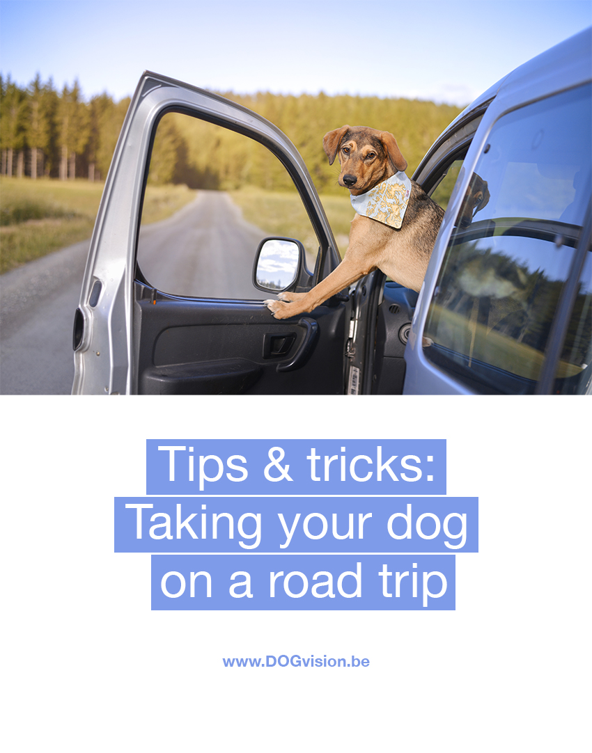 Tips & tricks: taking your dog on a road trip | www.DOGvision.be