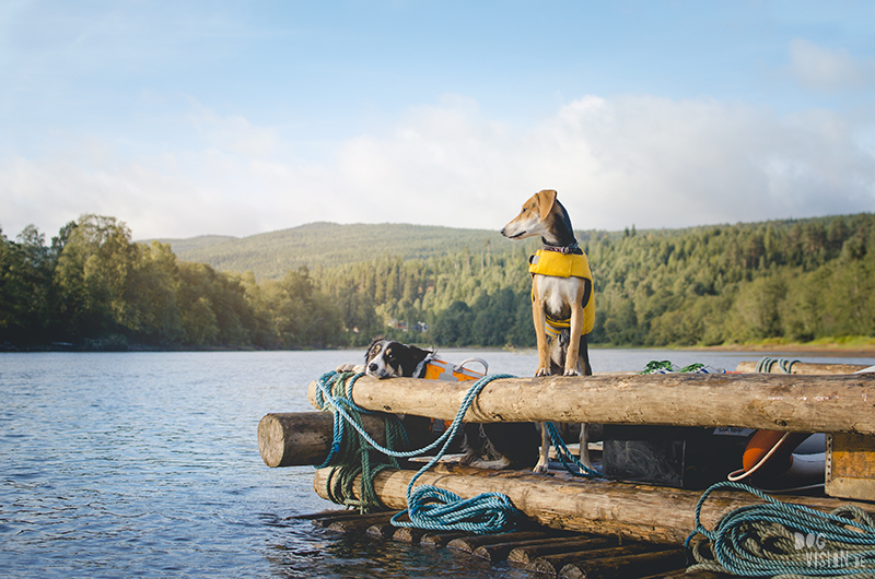 Two days on a timber raft with dogs, Värmland, Sweden, dog blogger, adventure dogs, European dog photographer, www.DOGvision.eu