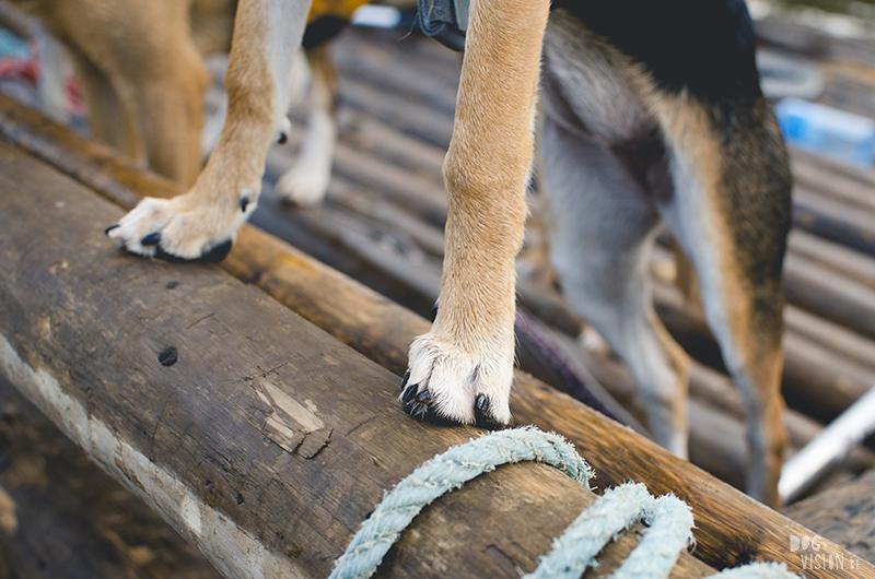 Tweedaagse vlottentocht met honden in Värmland (Zweden), hondenfotografie, hondenfotograaf, avontuur en kamperen met honden, www.DOGvision.be