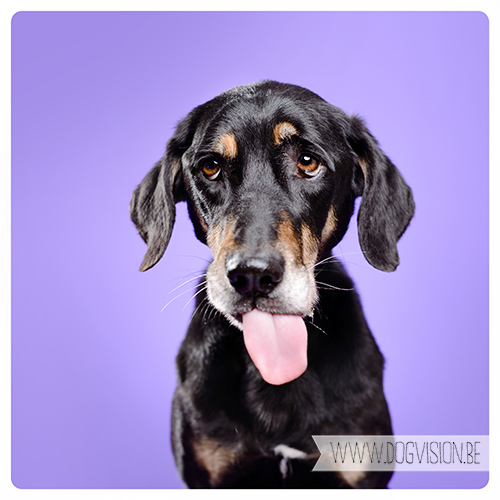 #TongueOutTuesday   www.DOGvision.be   dog photography
