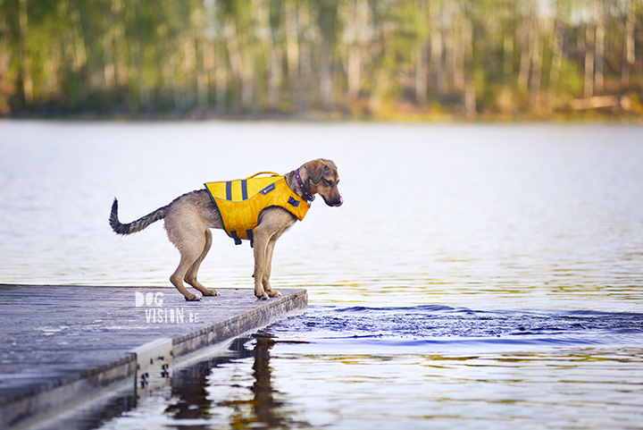 Muttpuppy learn to swim| Ruffwear life jacket | dog photography tips & tricks on www.DOGvision.be